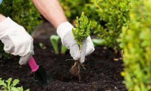 Посівний календар на 2020 рік: для садівника і городника
