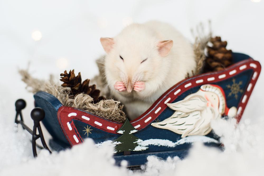 Щур (Пацюк) - талісман та символ 2020 року