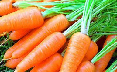Посадка моркви в 2020 році