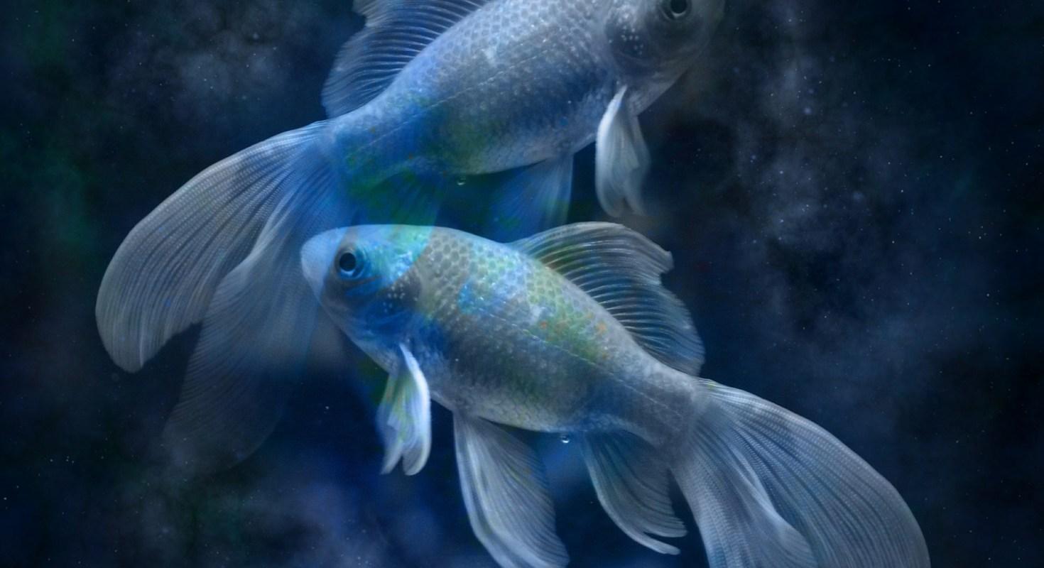 Гороскоп на 2020 рік Риби