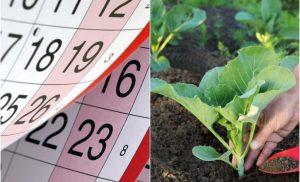Місячний посівний календар на 2021 рік садівника і городника