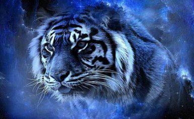 Новий 2022 — рік Чорного Водяного Тигра