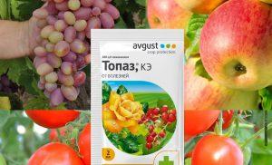 Препарат Топаз для рослин — інструкція із застосування, відгуки