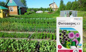 Фітоверм — інструкція із застосування для рослин, відгуки